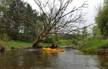 spływ rzeką Oleśnicą